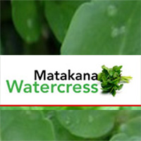 Matakana Watercress